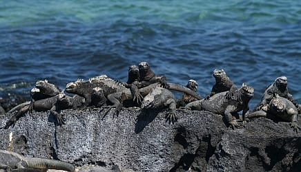 Galapagos Kosher Tour